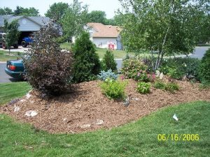 Landscaping Plant Size Options in Minnesota
